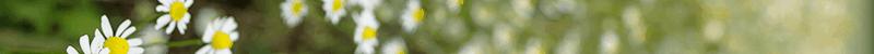 chamomile alpha bisabolol terpene