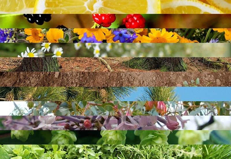 terpene-aroma-taste-cannabis.jpg?x54165