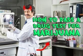 how to pass a drug test for marijuana