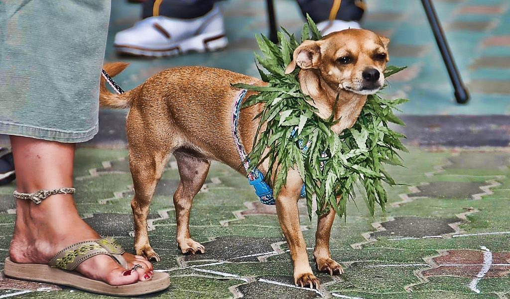 20 Stoner Names for Your Dog, Cat, or Pet Rock