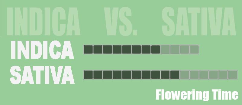 indica sativa flowering time