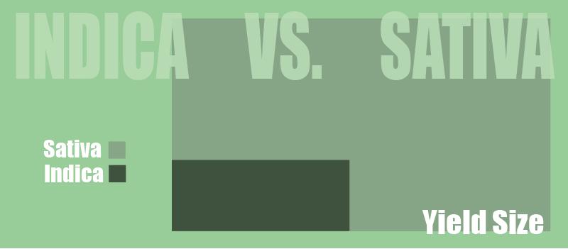 sativa yield vs indica yield
