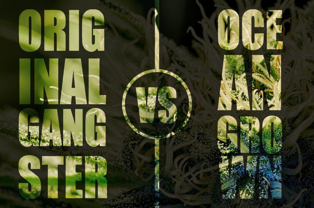 og meaning original gangster vs ocean grown