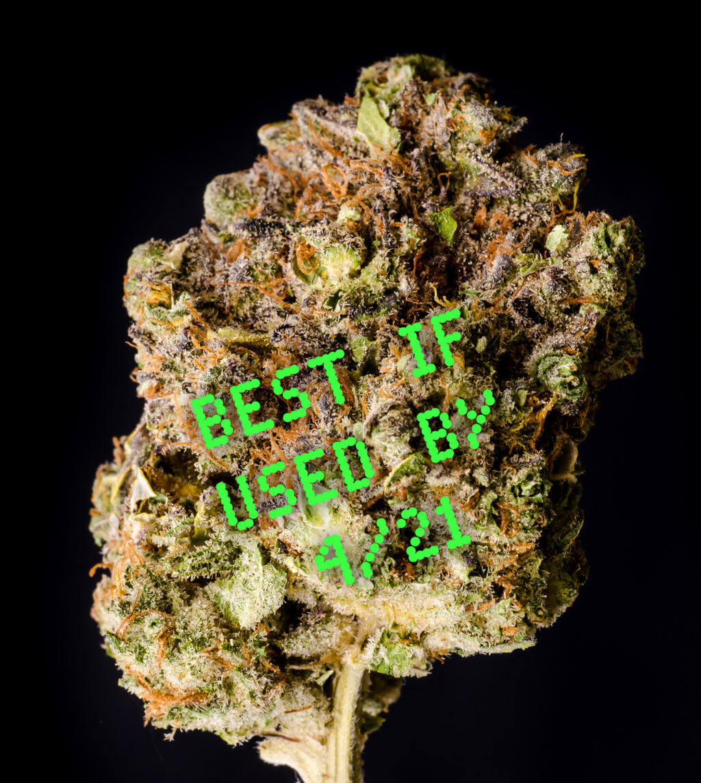 Can Weed Go Bad Storage Tips Mary Jane S Diary